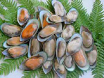 Half shell green mussles